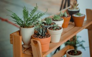 indoor plants for air pollution - air purifier
