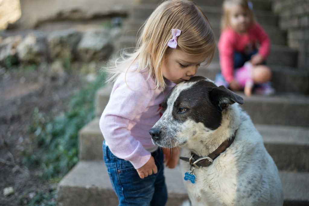 Dogs - More Resistant to allergies